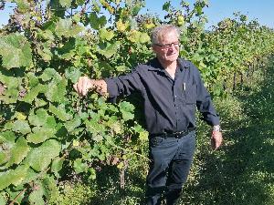 Tuniberg Winzer bei Freiburg vor besonderen Herausforderungen zur Weinlese 2021
